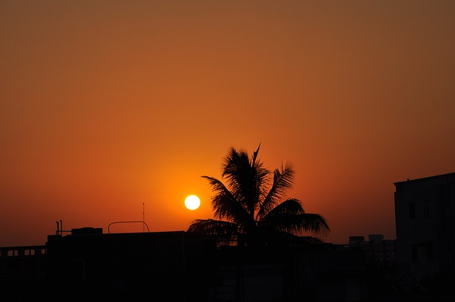 view of sunset and a coconut tree