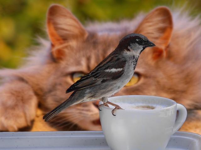 Sparrow and cat